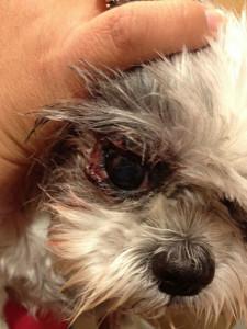 Pet Case Study: Dog Food Allergy