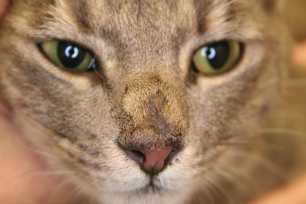 can cat allergies go away