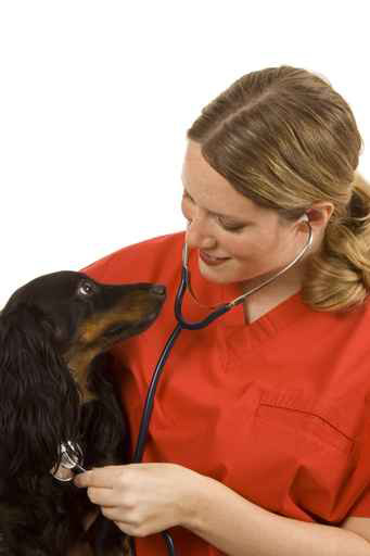 Our board certified dermatologist treat pet skin issues
