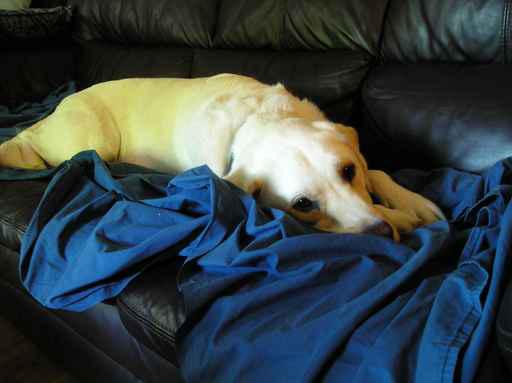 Reduce Pet's Discomfort
